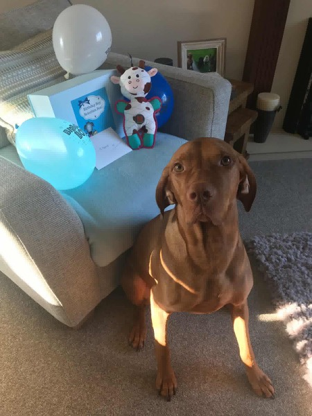 Maximus with his Birthday Box!