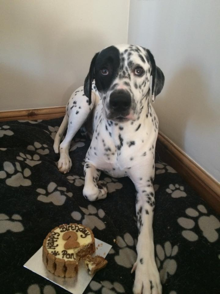 Pongo turns 2!