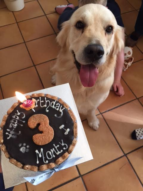 The lovely Monty on his 3rd Birthday