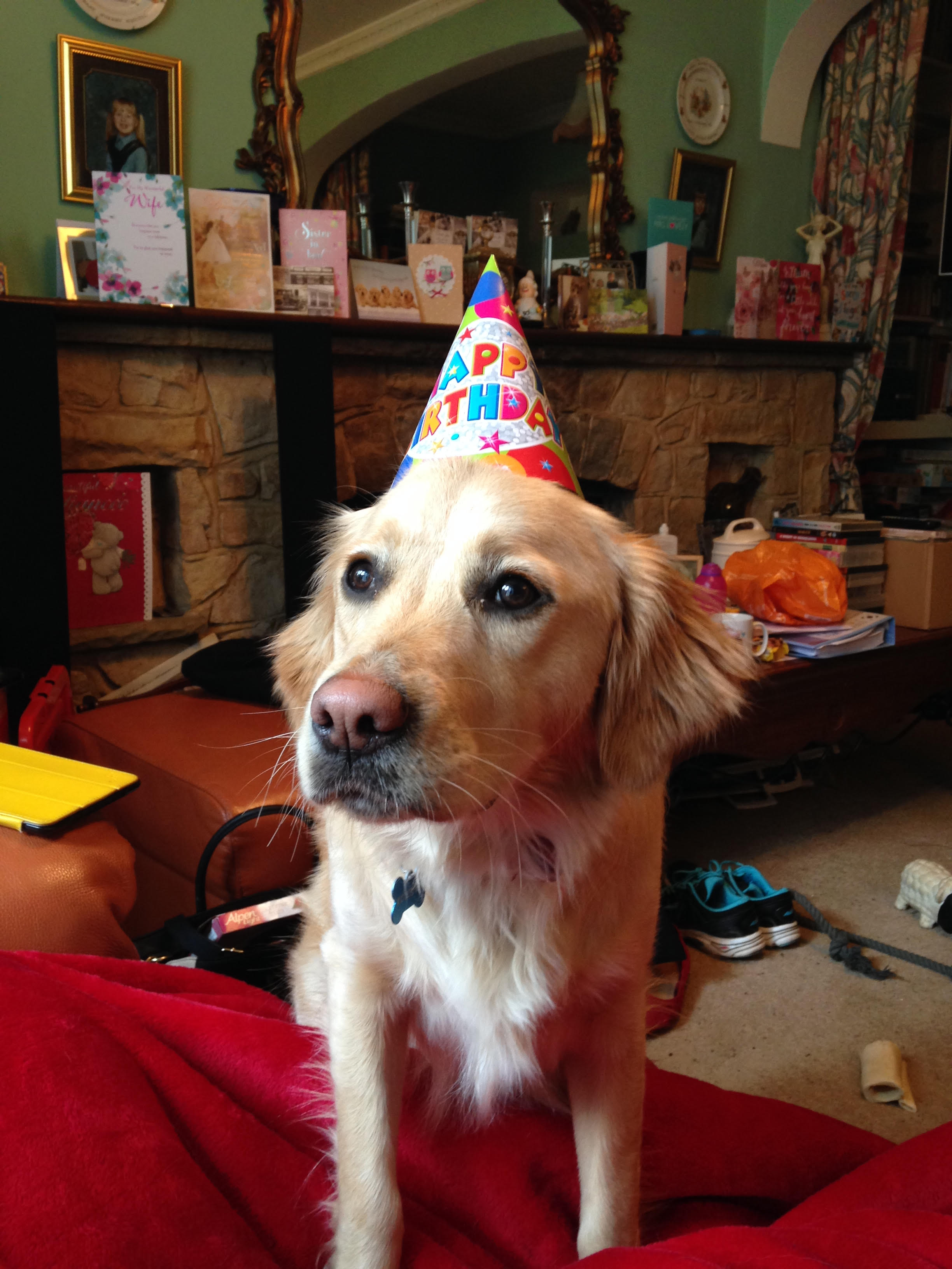 Lucy on her recent 1st Birthday