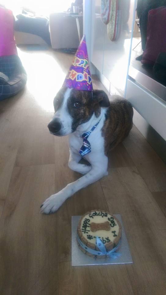 Toby on his 'Gotcha Day'