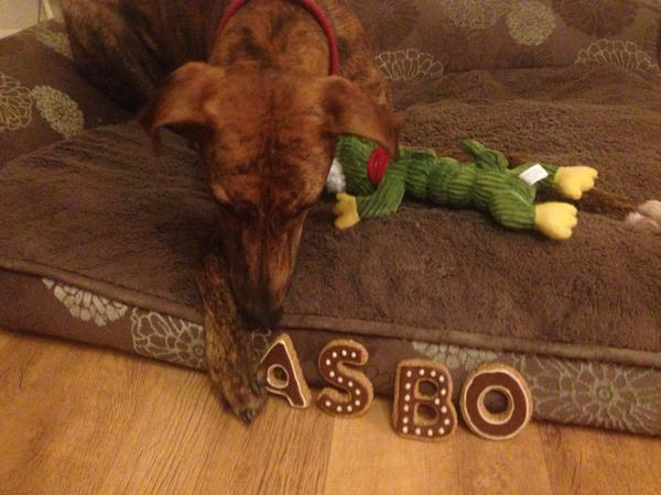 Lovely pup ASBO with his cookies