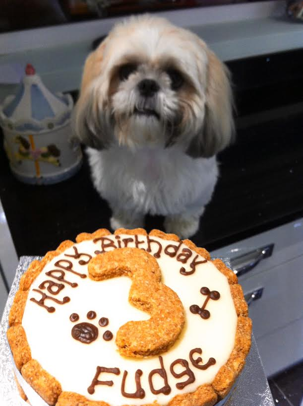 Fudge turns 3!