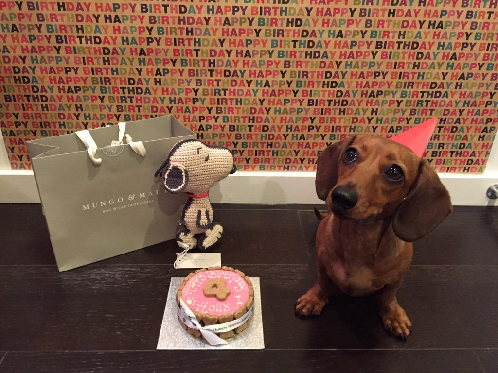 Holly turns 4