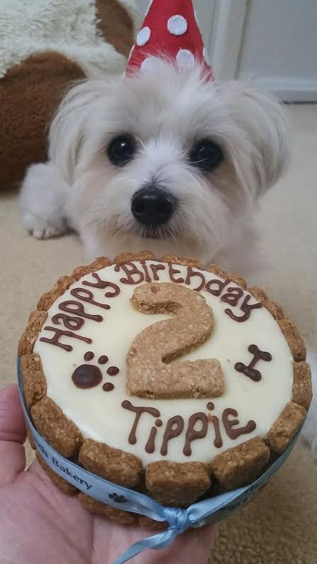 Happy Birthday Tippie