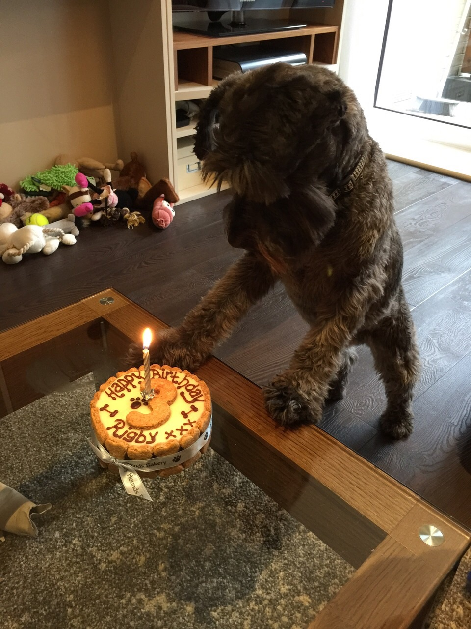 Regular Rigby on his 3rd Birthday!