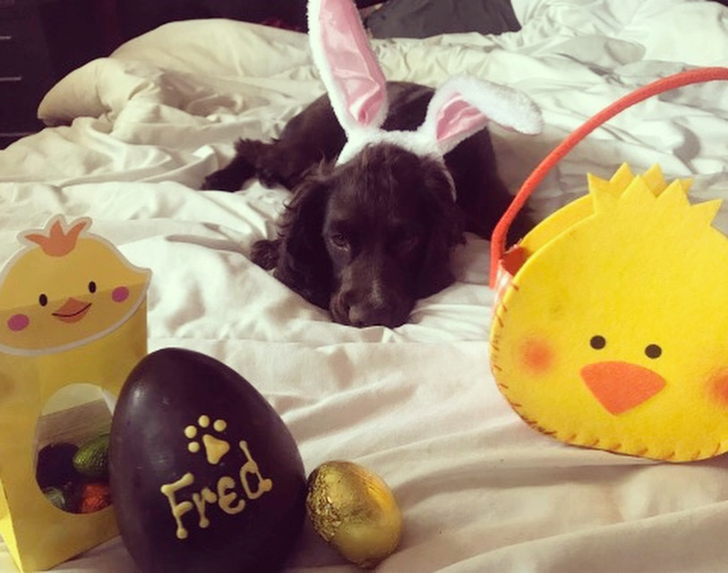 Hoppy Easter Fred!