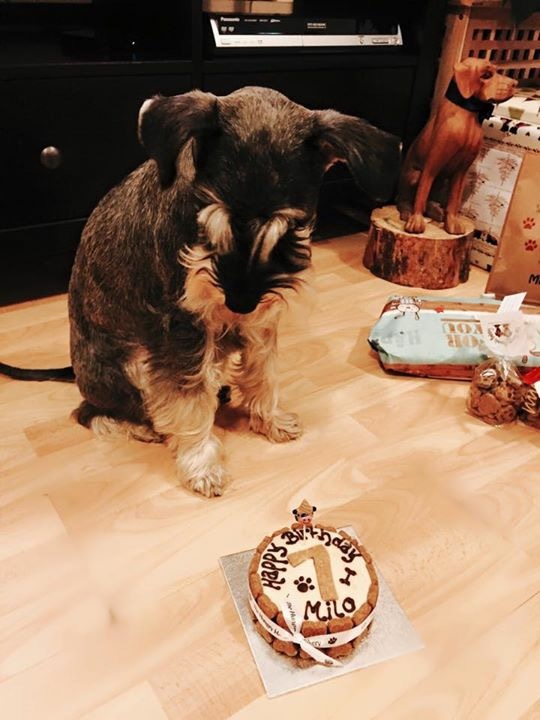 Milo's 1st Birthday!