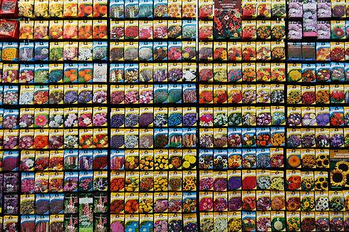 Seed Wholesale Distribution