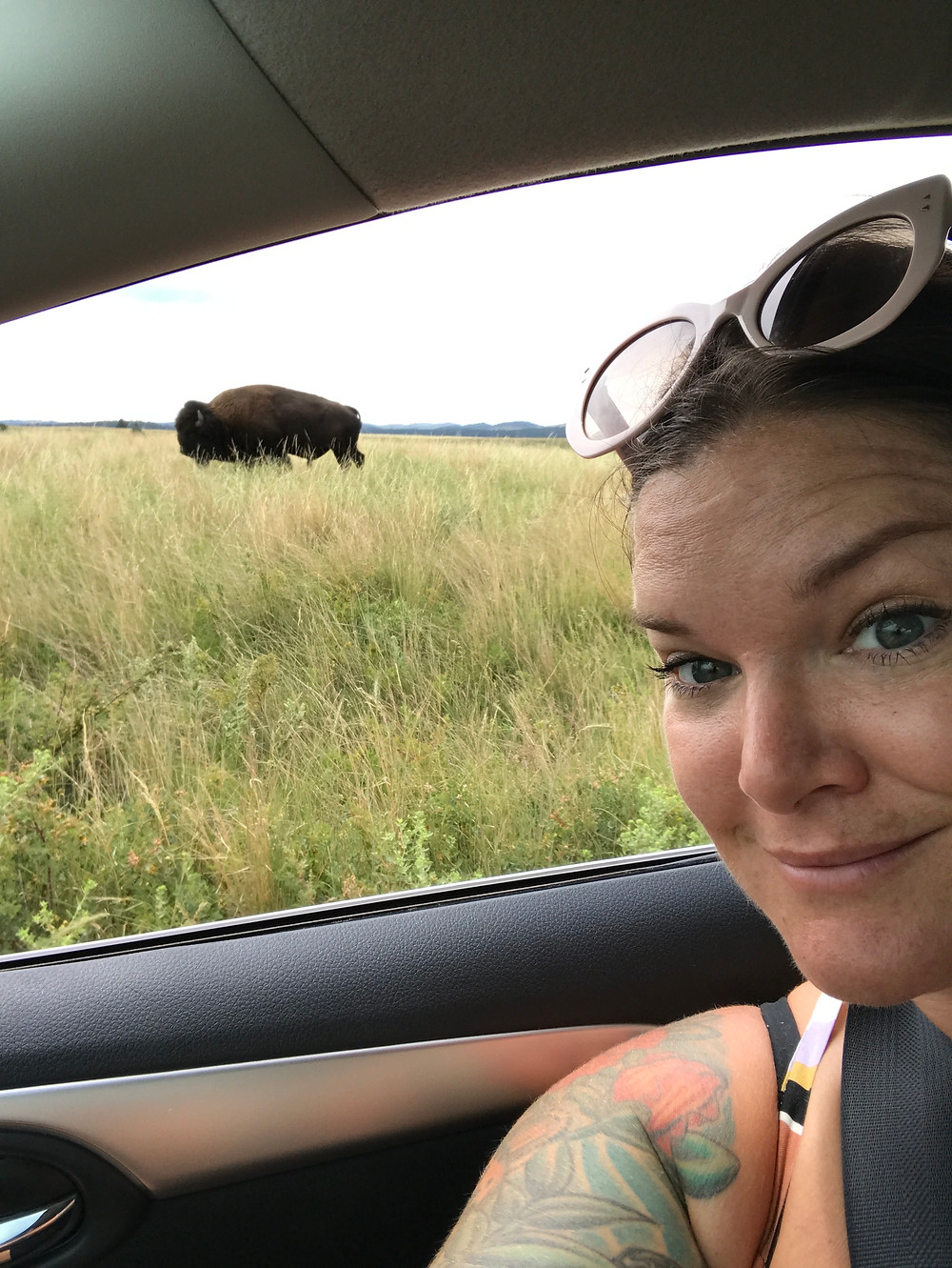 We saw hundreds of wild bison. Including a Momma, baby and Dad that walked across the road right in front of us.