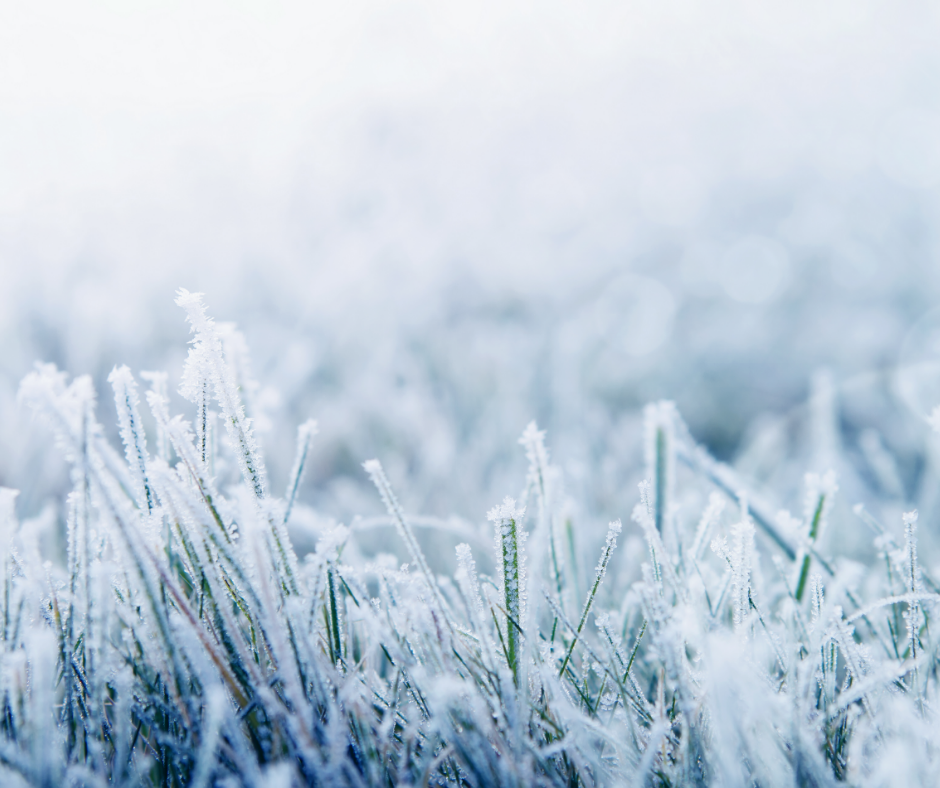 grass covered in snow and ice