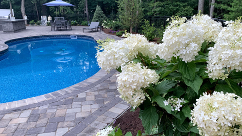 in-ground pool, patio pavers, and flower bushes.
