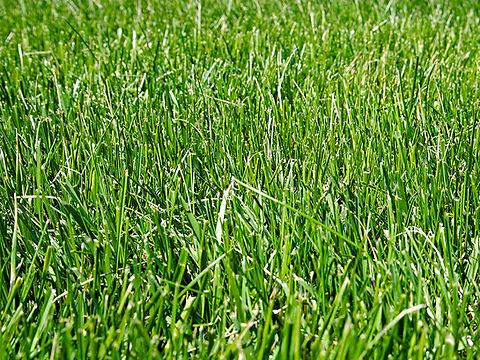 GrassStains_Banner.jpg