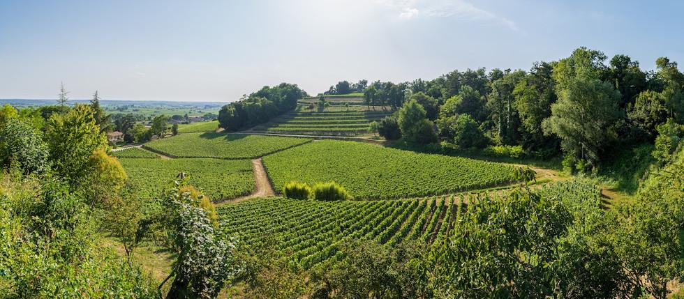 B&B in Saint EMilion, near Bordeaux, in Vineyards