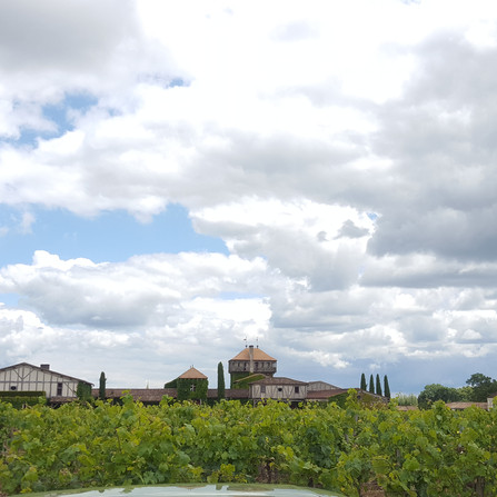 Wine Activities planning near Bordeaux