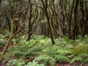 Parque Natural Anaga: Un paraíso para los senderistas