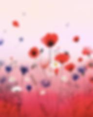Capture d'écran 2020-01-13 à 18.55.31.pn