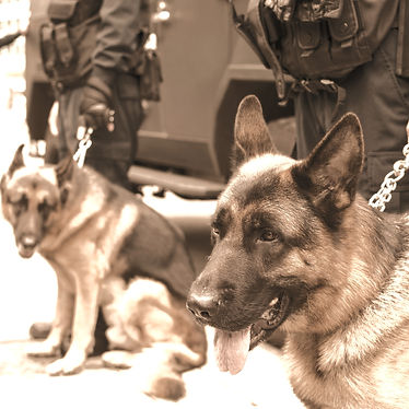 Canine Security London Dog Patrol.jpg
