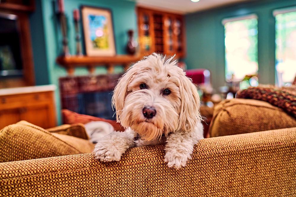 Portrait of Laddie
