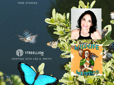 Blue Morpho Butterfly, with Tali Orad from The Butterfly Effect