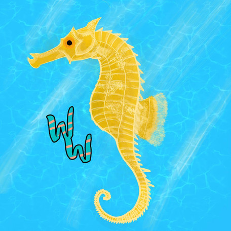 Lined Seahorse!