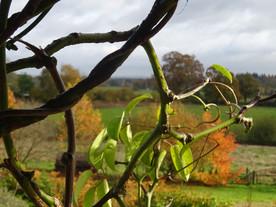 Autumn at Furzey Gardens