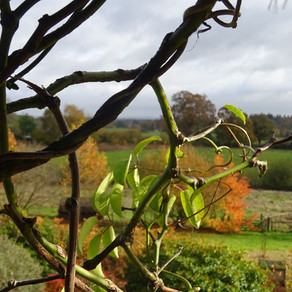 Autumn at Furzey Gardens