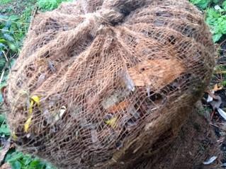 Making leaf compost