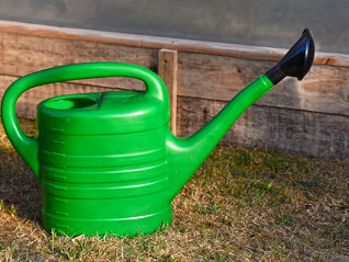 Watering your garden: useful tips for conserving water
