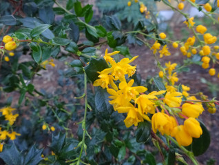 Late bloomers and allelopathy