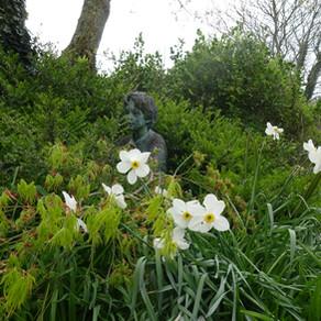 Denman's Garden