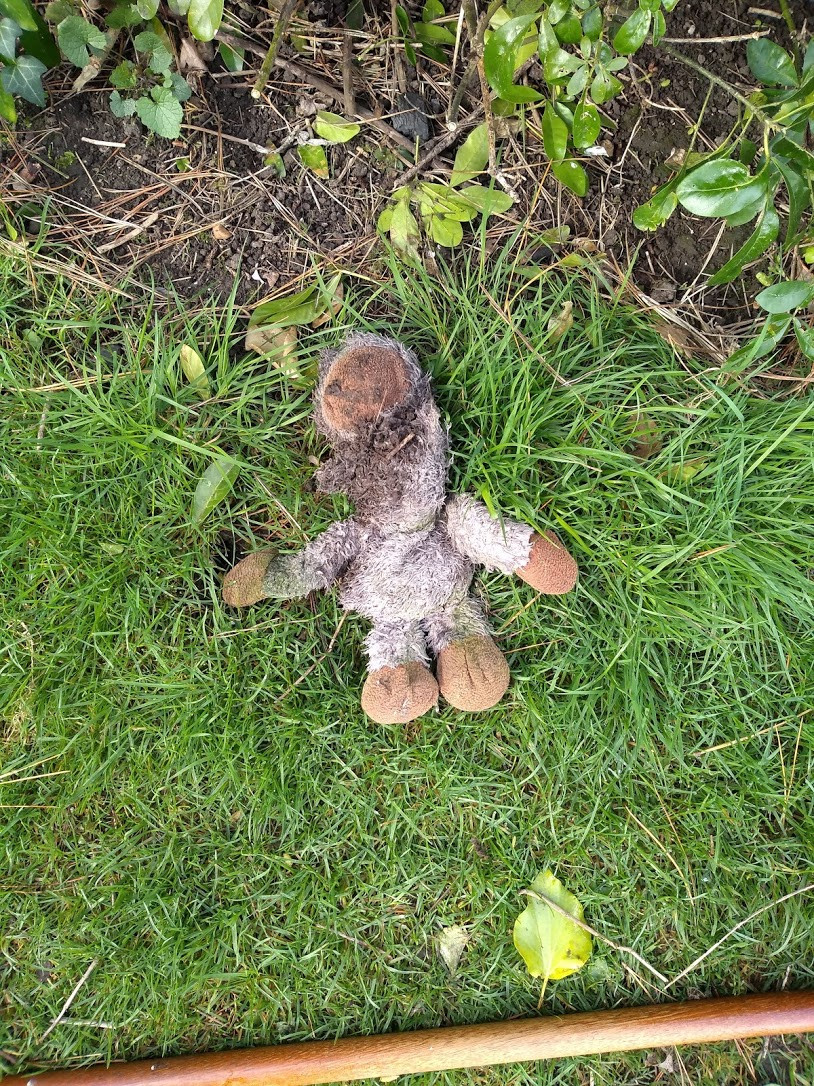 Dog toy left in our garden by foxes