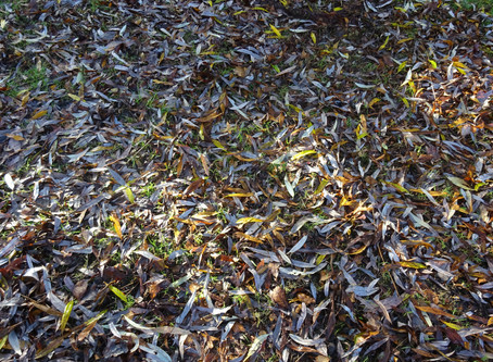 Mythbust: Fallen leaves are full of nutrients