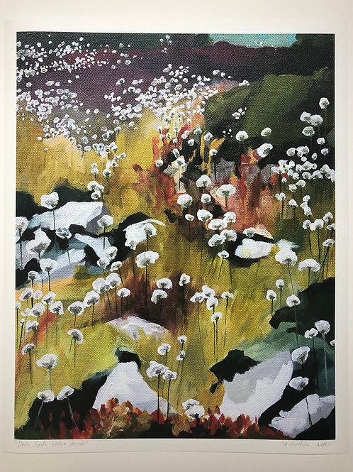 Dolly Sods Cotton Grass Print