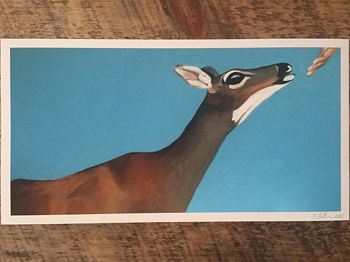 Key Deer Fine Art Print