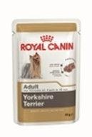 1,5 Kg Yorkshire Terrier adult