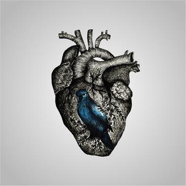 Felipe Macedo - Pássaro (Single)
