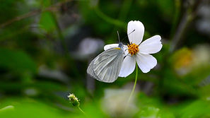 butterfly and flower.jpg