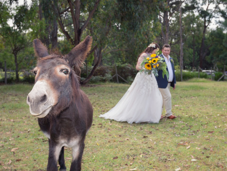 Alannah & Dan's wedding at Log Cabin Ranch, Monbulk