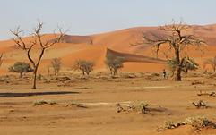 Image_désert.PNG