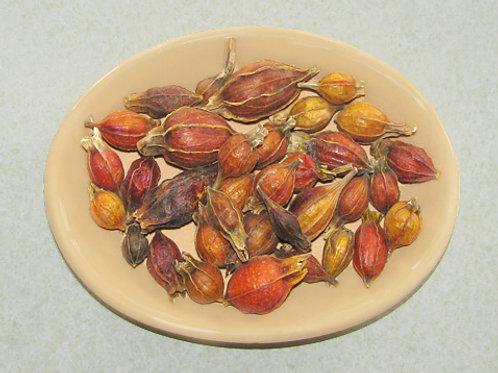 Gardenia Seed