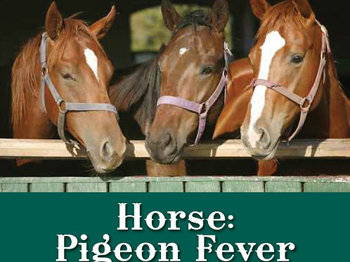 Horse Pigeon Fever Prevention