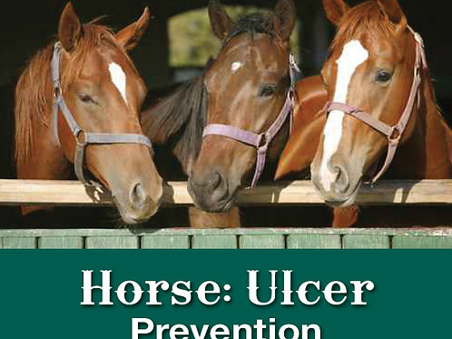 Horse Ulcer Prevention
