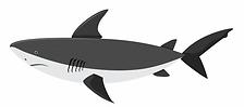 forex shark.PNG