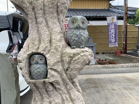 枝木ふくろう【現品販売】