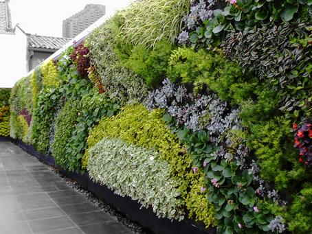 Impresiona con jardines verticales