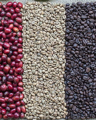 Coffee Berries and Coffee Beans_edited.j