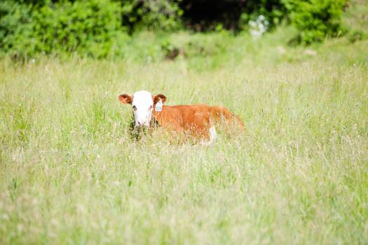 Pasture2020_LoRes_0028.jpg