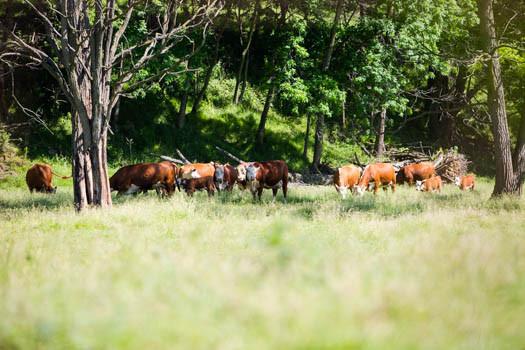 Pasture2020_LoRes_0025.jpg