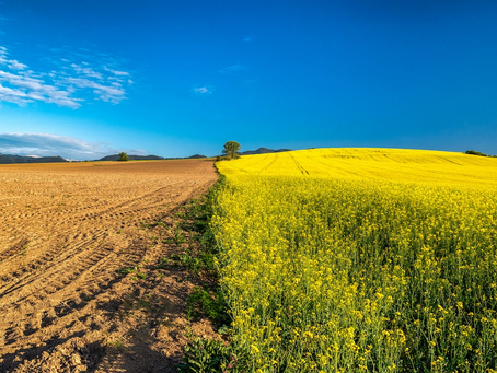 Regenerative agriculture is the next great ally in fight against climate change
